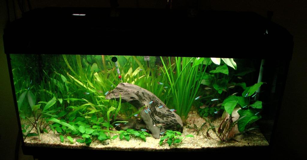 Lancement de mon premier aquarium 120l for Poisson eau chaude aquarium