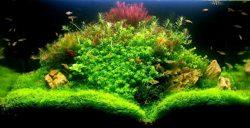 lumirium eclairage led pour aquarium d 39 eau douce. Black Bedroom Furniture Sets. Home Design Ideas